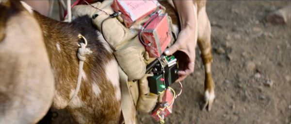 palm springs goat